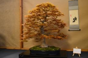 Siegerbaum (Sador Papp HU)