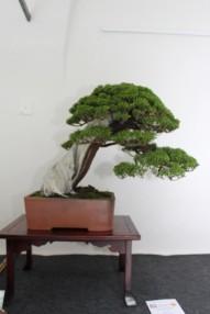 Juniperus/Chin. Nik Rozman/SLO